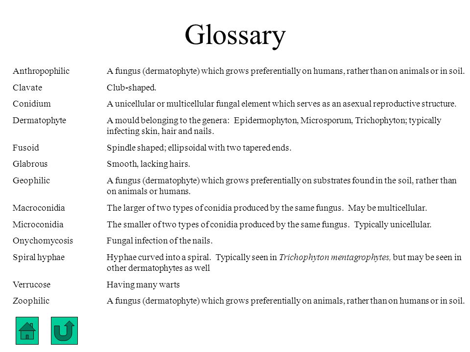 Glossary Anthropophilic A fungus (dermatophyte) which grows preferentially on humans, rather than on animals or in soil.