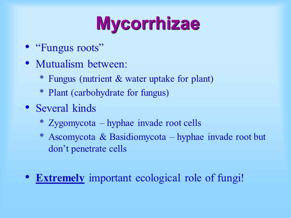 Mycorrhizae Fungus roots Mutualism between: Several kinds