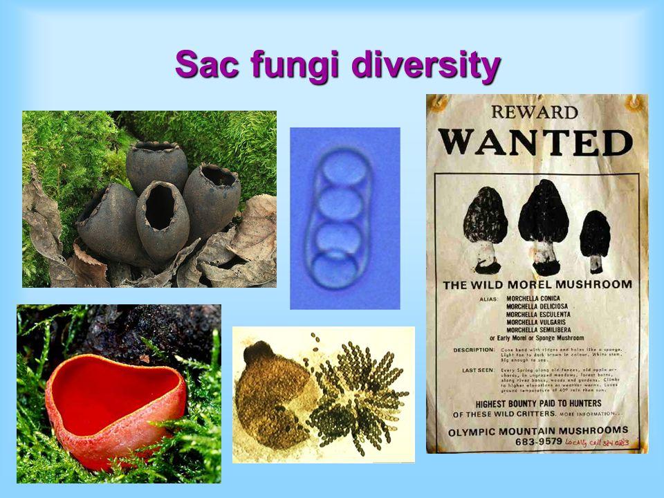 Sac fungi diversity