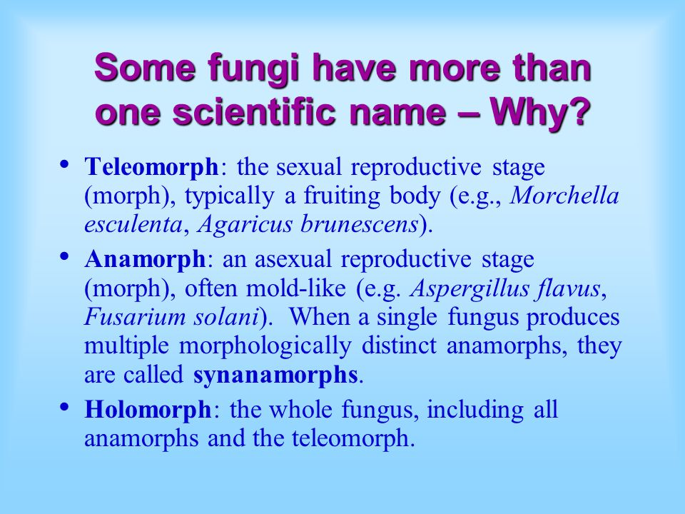 Some fungi have more than one scientific name – Why