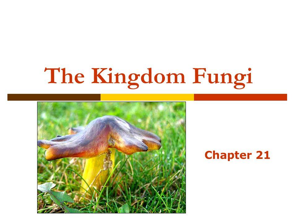 The Kingdom Fungi Chapter 21