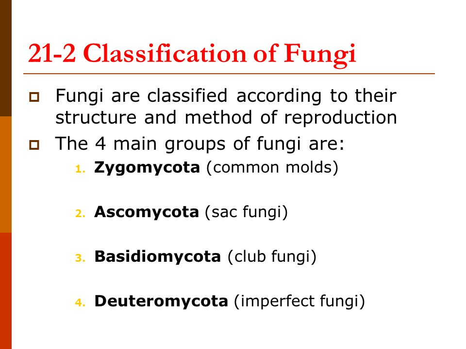 21-2 Classification of Fungi