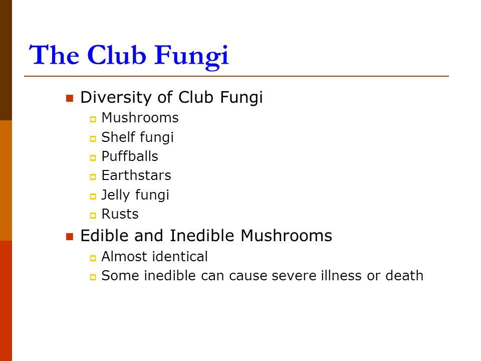 The Club Fungi Diversity of Club Fungi Edible and Inedible Mushrooms