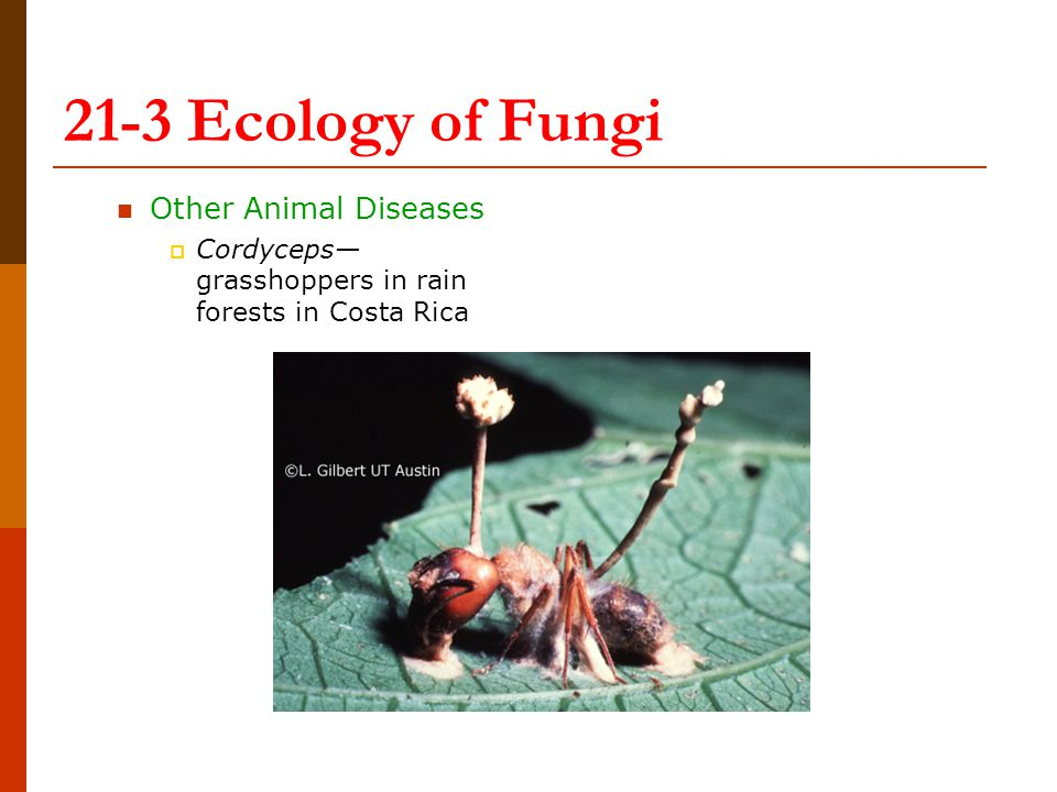 21-3 Ecology of Fungi Other Animal Diseases