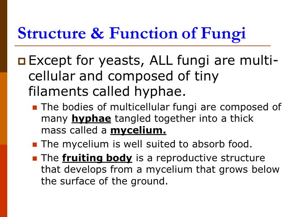 Structure & Function of Fungi