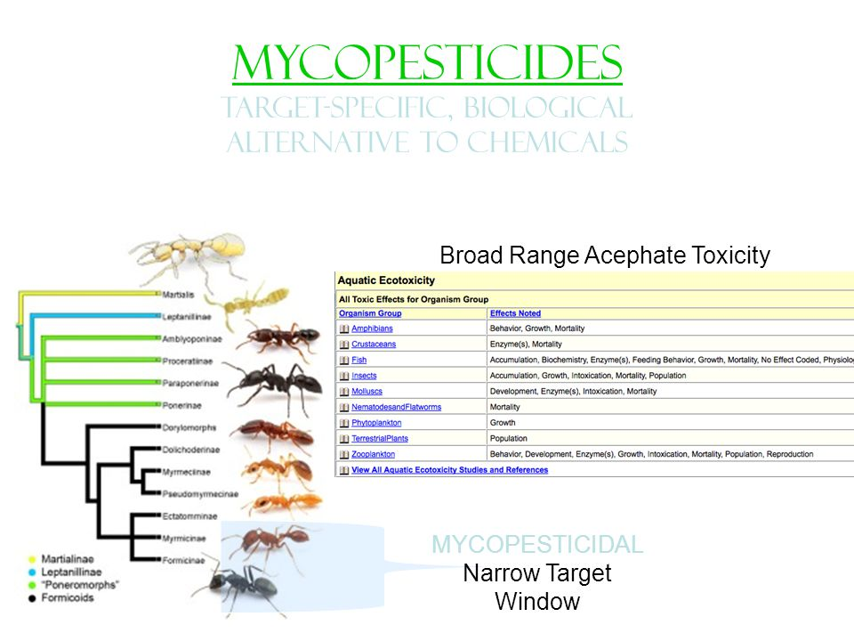 MYCOPESTICIDES TARGET-SPECIFIC, Biological alternative to chemicals