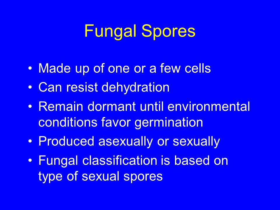 Fungal Spores Made up of one or a few cells Can resist dehydration