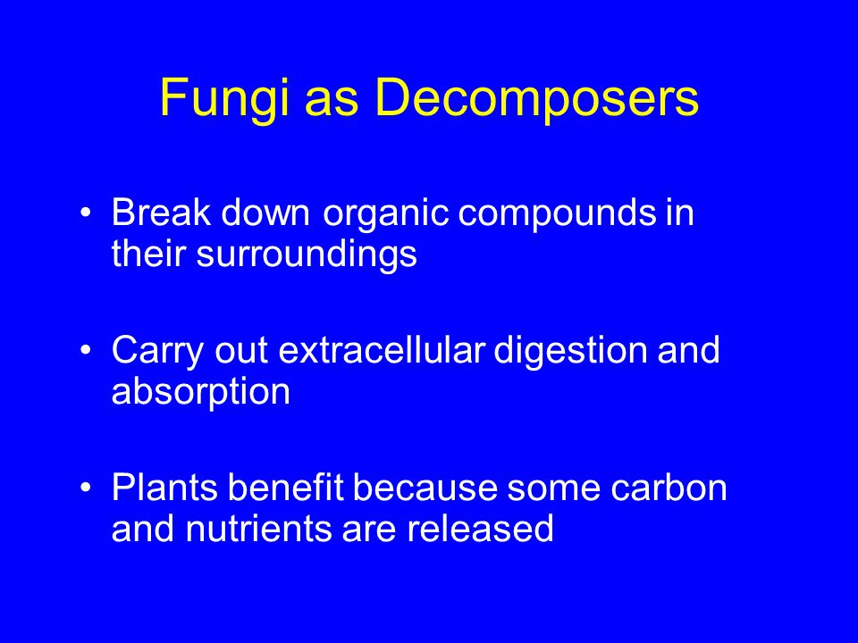 Fungi as Decomposers Break down organic compounds in their surroundings. Carry out extracellular digestion and absorption.
