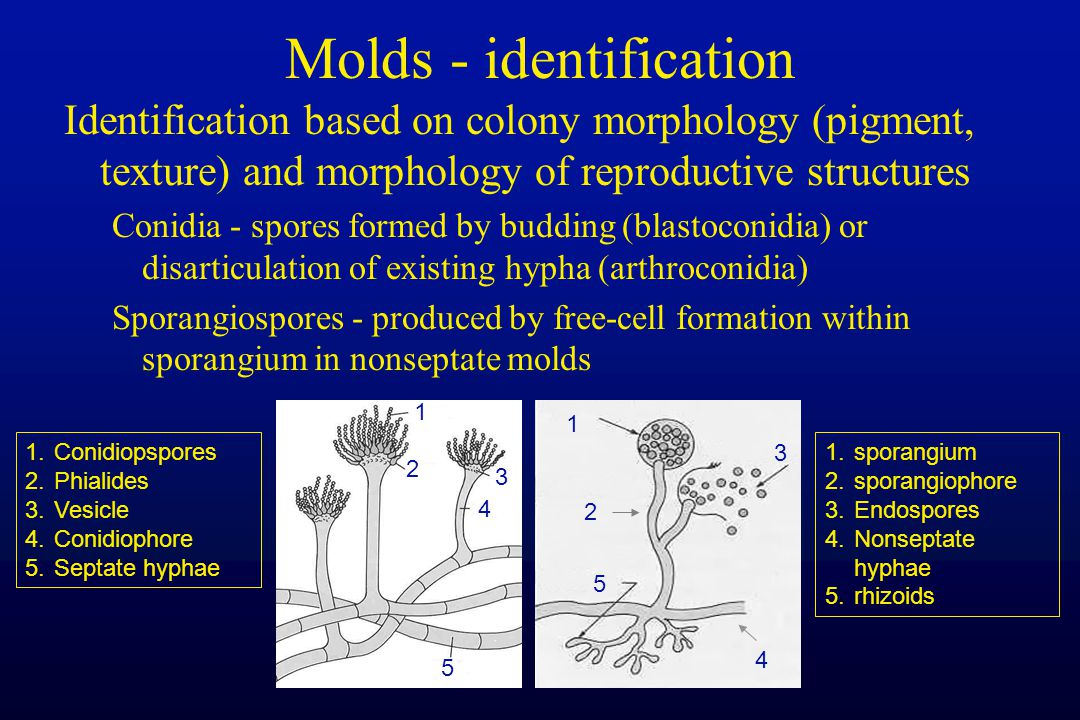 Molds - identification