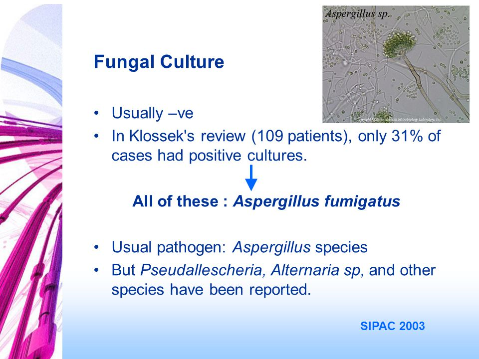 Fungal Culture Usually –ve