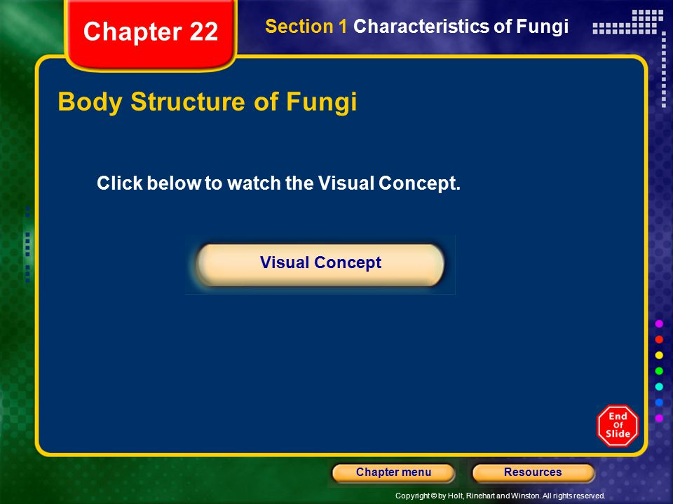 Body Structure of Fungi