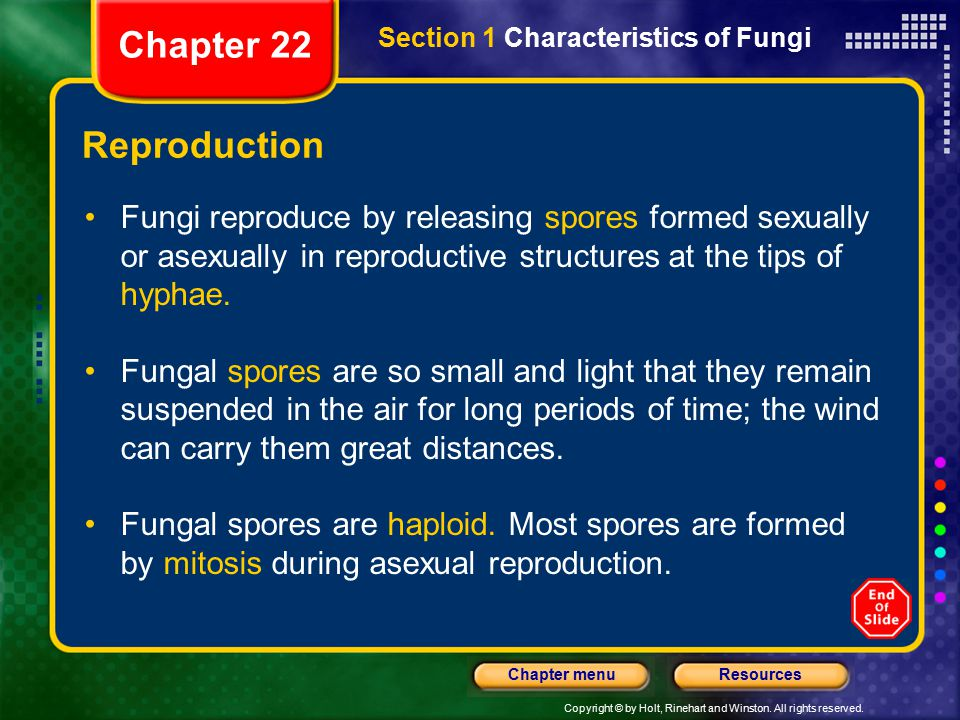 Chapter 22 Section 1 Characteristics of Fungi. Reproduction.
