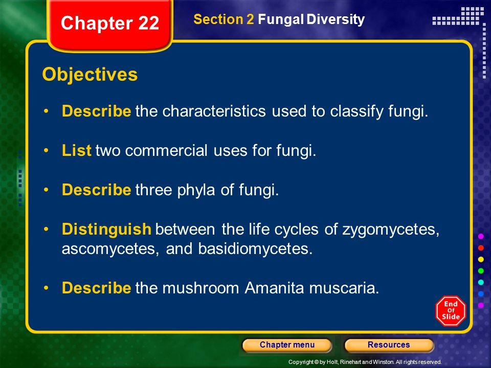 Chapter 22 Section 2 Fungal Diversity. Objectives. Describe the characteristics used to classify fungi.