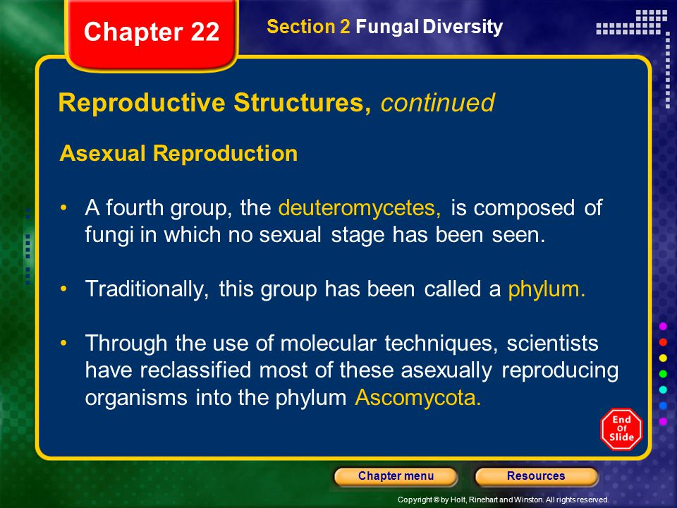 Reproductive Structures, continued
