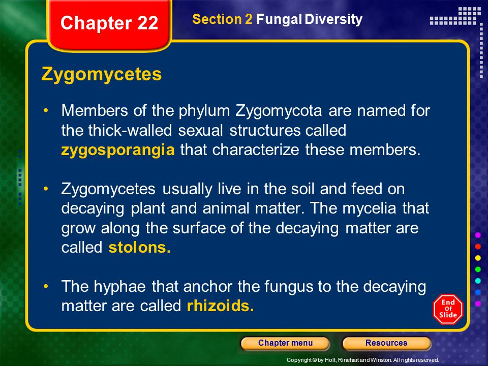 Chapter 22 Section 2 Fungal Diversity. Zygomycetes.