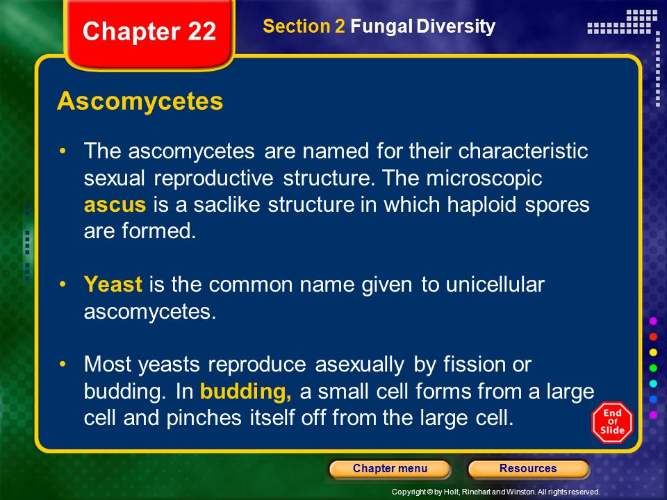 Chapter 22 Section 2 Fungal Diversity. Ascomycetes.