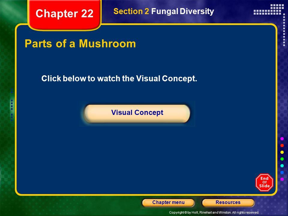 Chapter 22 Parts of a Mushroom Section 2 Fungal Diversity