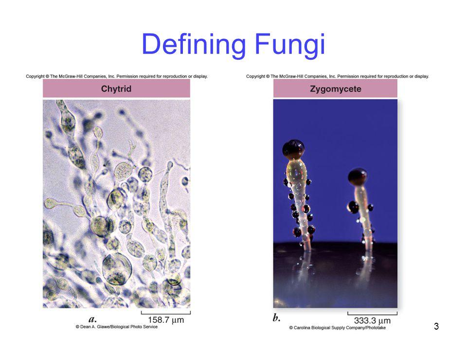 Defining Fungi