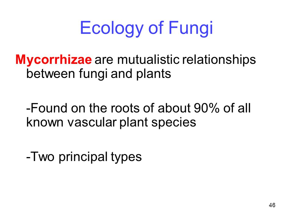 mutualistic relationship of plants and mycorrhizal fungi
