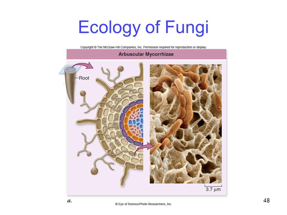 Ecology of Fungi