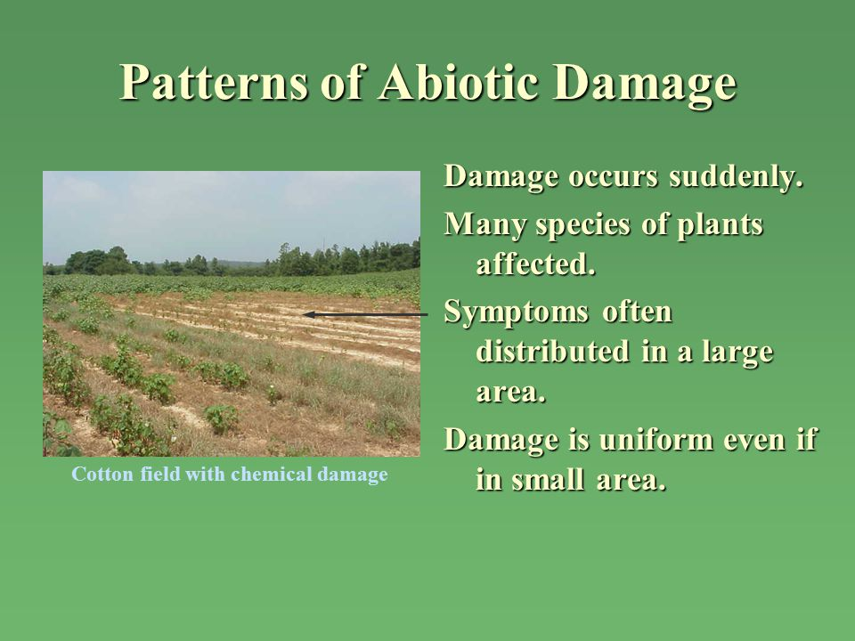 Patterns of Abiotic Damage