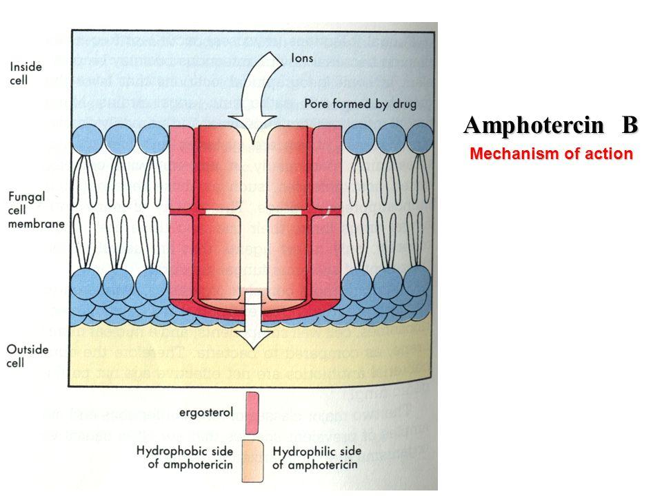 Amphotercin B Mechanism of action