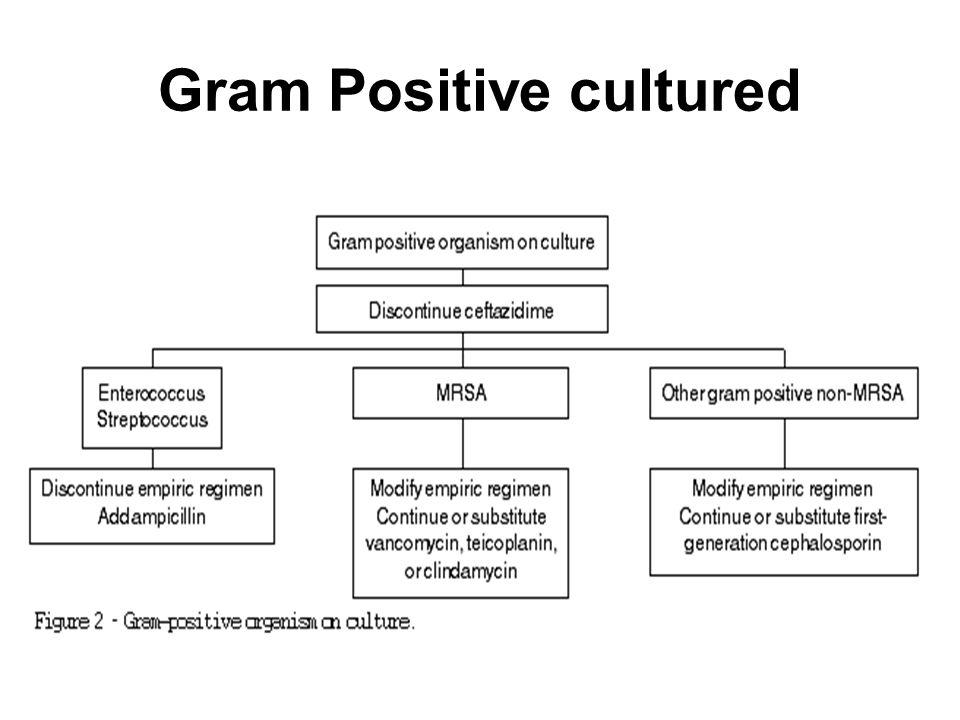 Gram Positive cultured
