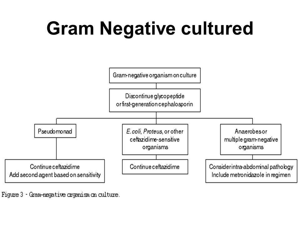 Gram Negative cultured