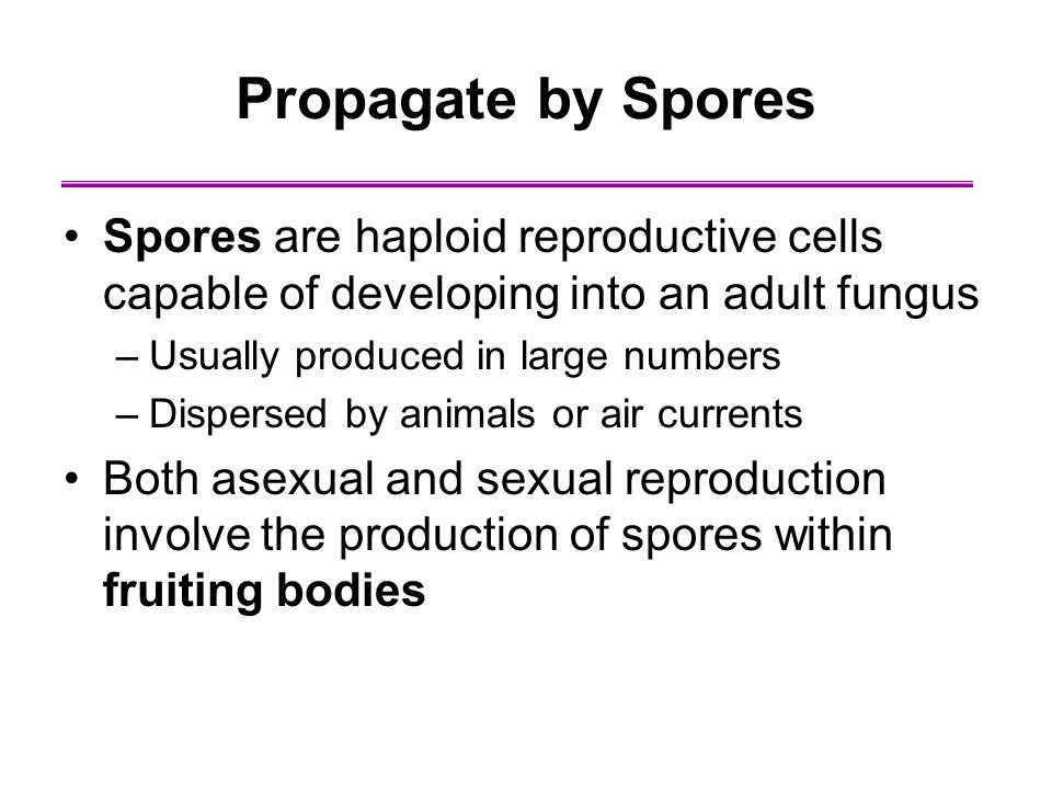 Propagate by Spores Spores are haploid reproductive cells capable of developing into an adult fungus.