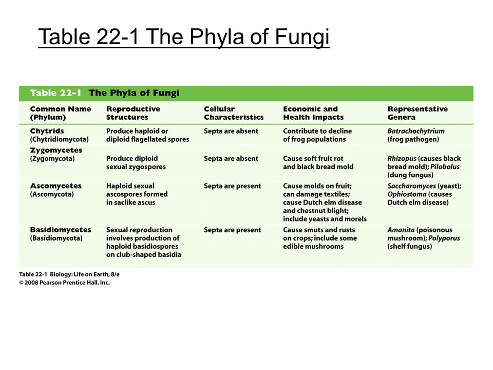 Table 22-1 The Phyla of Fungi