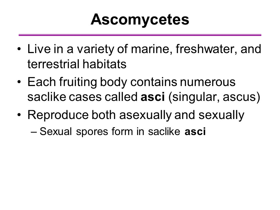 Ascomycetes Live in a variety of marine, freshwater, and terrestrial habitats.