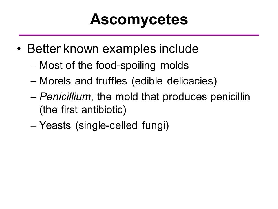 Ascomycetes Better known examples include