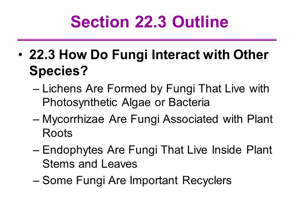Section 22.3 Outline 22.3 How Do Fungi Interact with Other Species