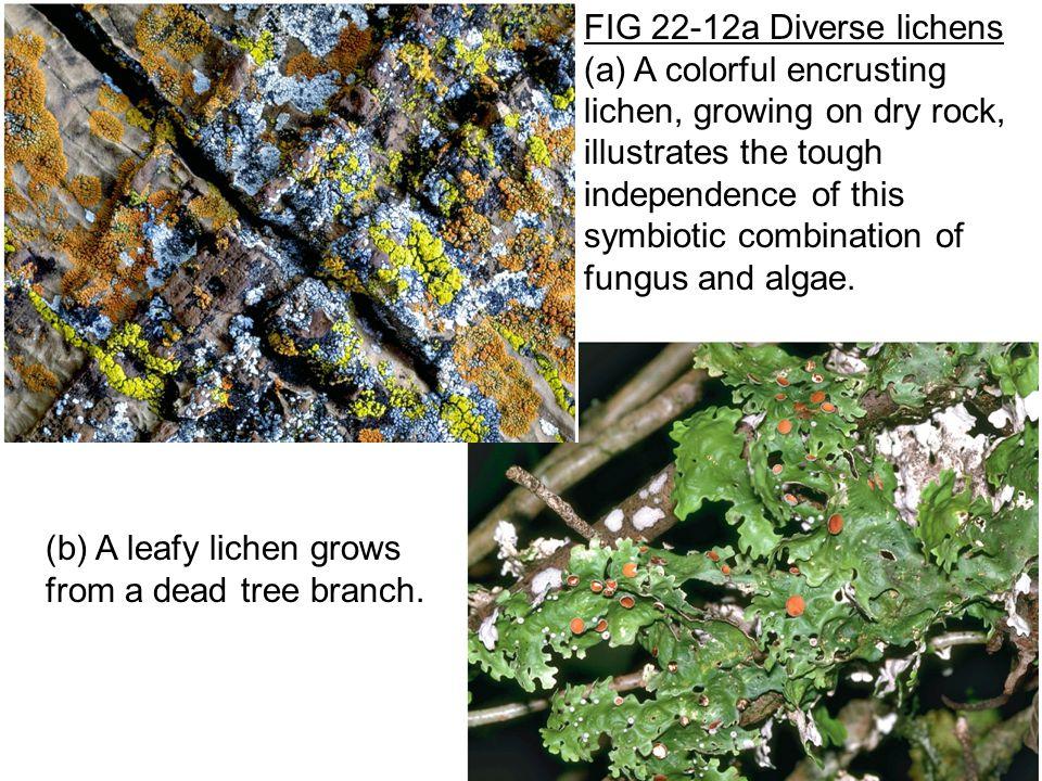 FIG 22-12a Diverse lichens