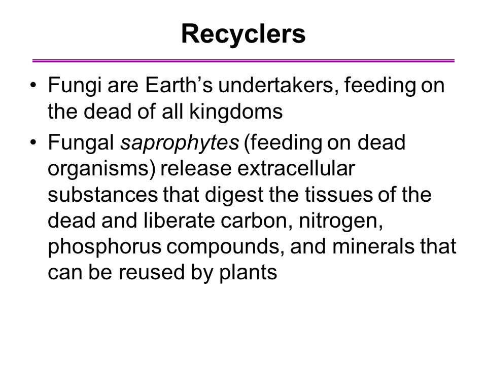 Recyclers Fungi are Earth's undertakers, feeding on the dead of all kingdoms.