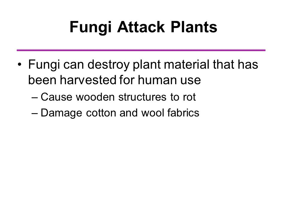 Fungi Attack Plants Fungi can destroy plant material that has been harvested for human use. Cause wooden structures to rot.