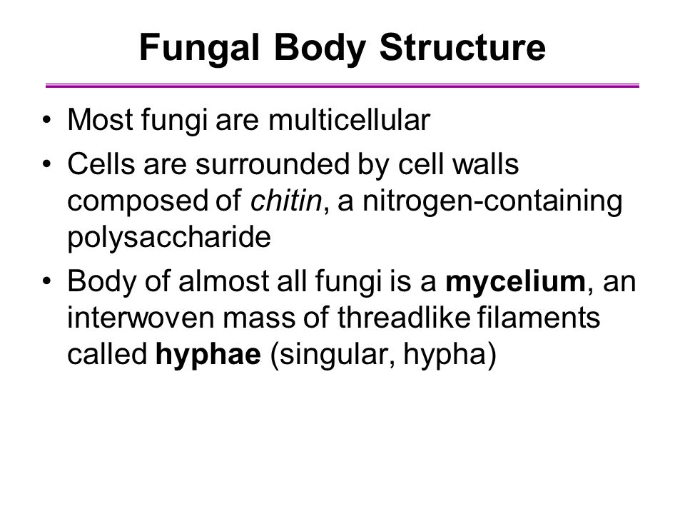 Fungal Body Structure Most fungi are multicellular