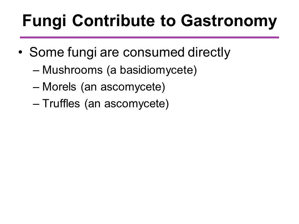 Fungi Contribute to Gastronomy