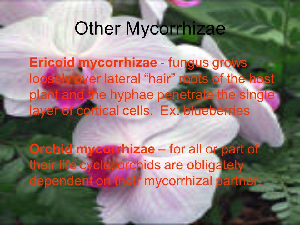 Other Mycorrhizae