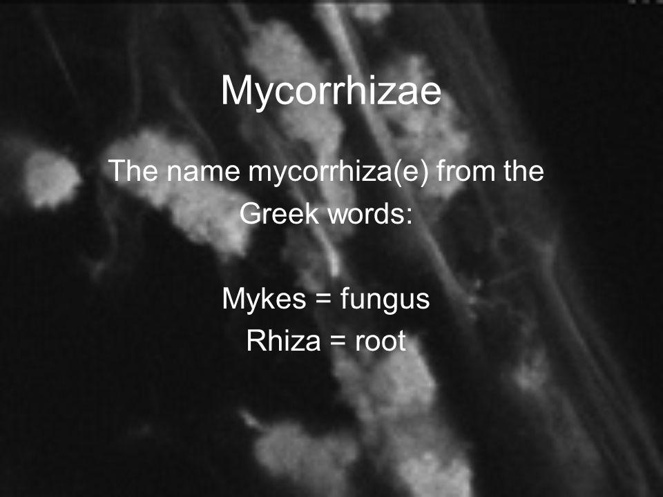 The name mycorrhiza(e) from the