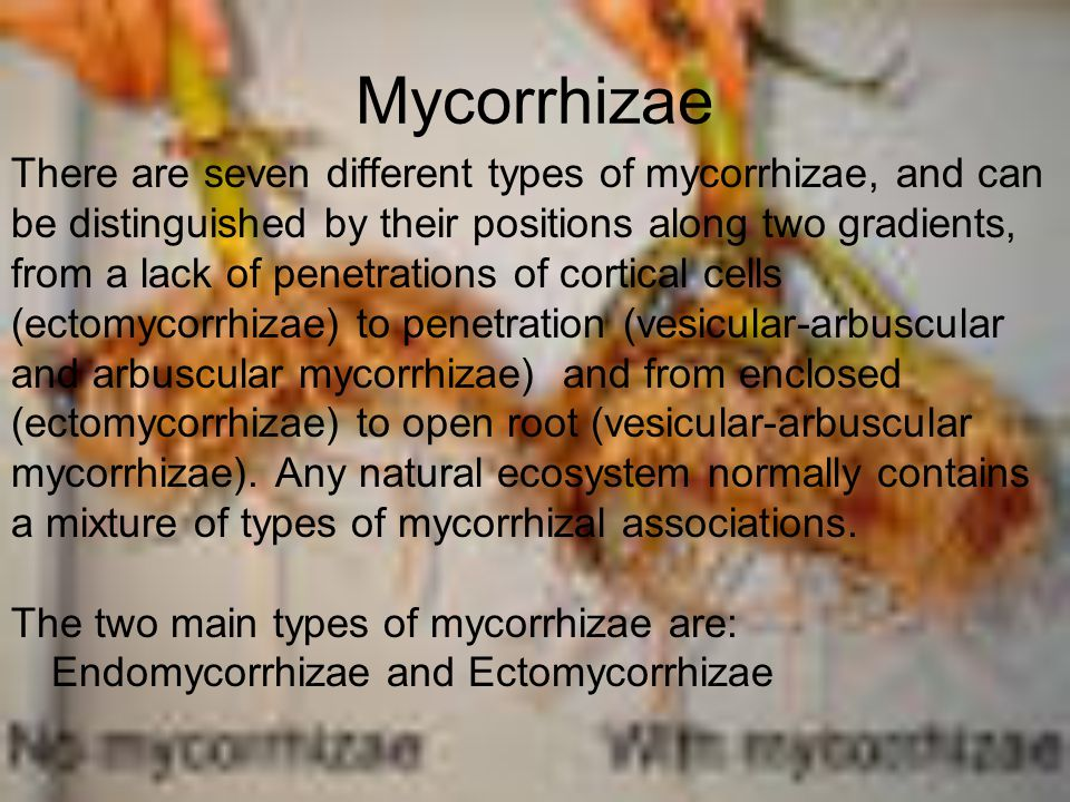 Mycorrhizae There are seven different types of mycorrhizae, and can