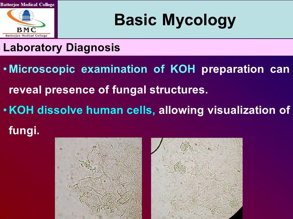 Basic Mycology Laboratory Diagnosis