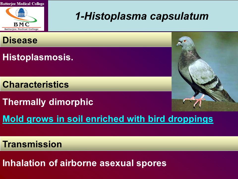 1-Histoplasma capsulatum