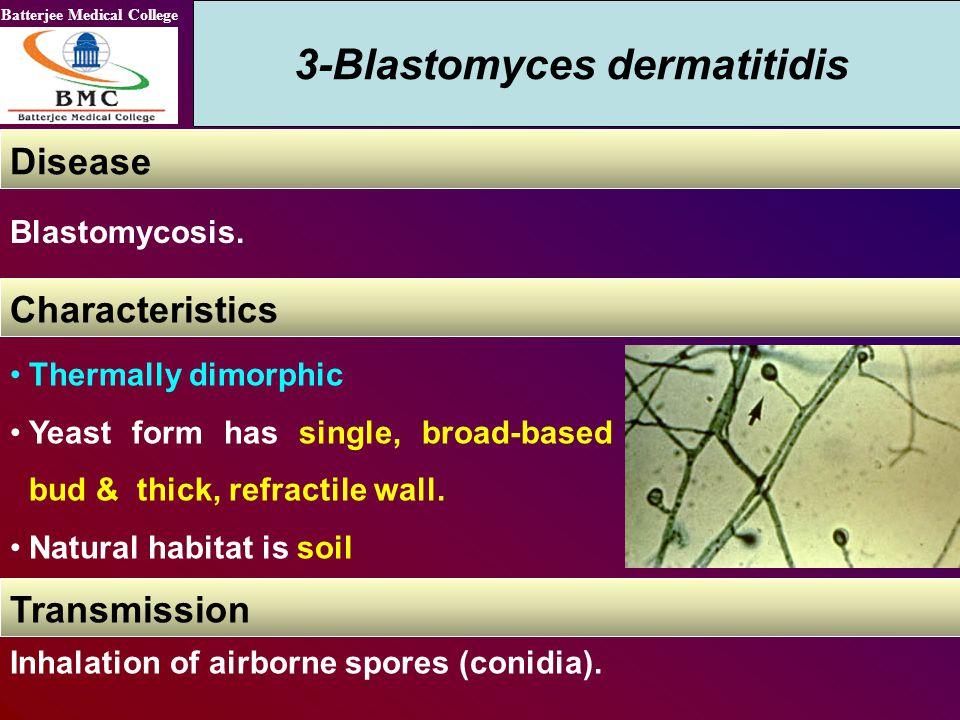 3-Blastomyces dermatitidis