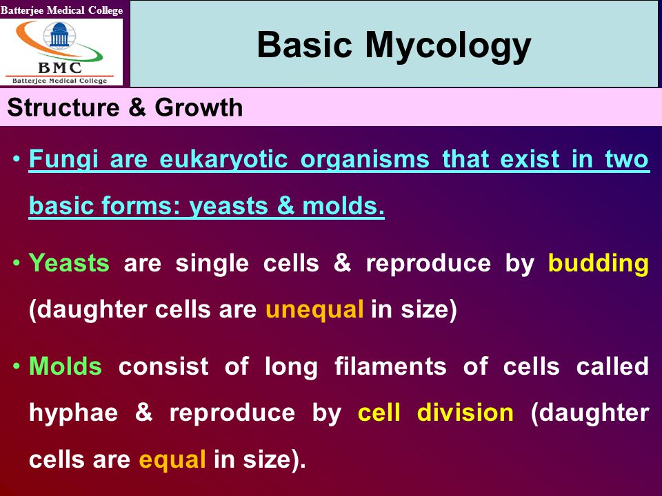 Basic Mycology Structure & Growth