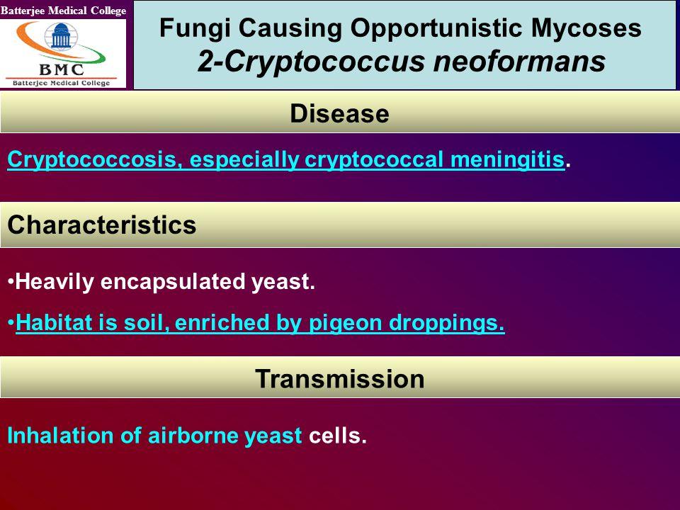 Fungi Causing Opportunistic Mycoses 2-Cryptococcus neoformans