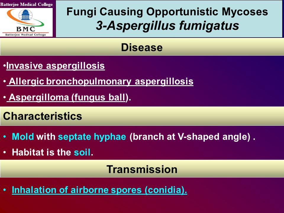 Fungi Causing Opportunistic Mycoses 3-Aspergillus fumigatus