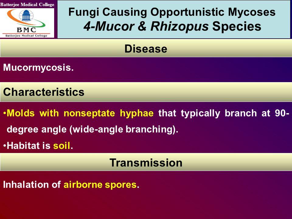 Fungi Causing Opportunistic Mycoses 4-Mucor & Rhizopus Species