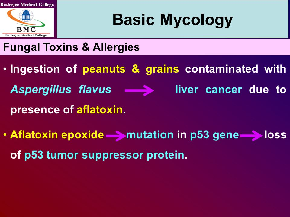 Basic Mycology Fungal Toxins & Allergies