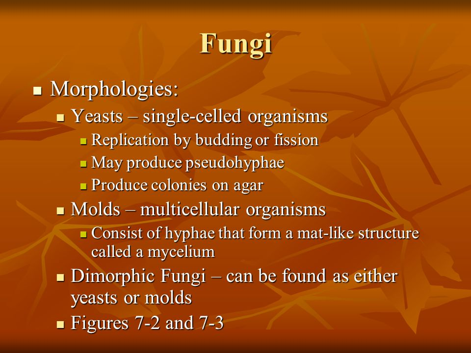 Fungi Morphologies: Yeasts – single-celled organisms